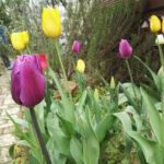 我が家にも春が来てました!!